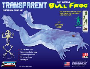 "Lindberg Transparent Bull Frog 11"" Long Model Kit"